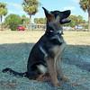 Sand Key Park Paw Playground 020709_00006