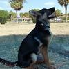 Sand Key Park Paw Playground 020709_00005