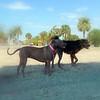 Sand Key Park Paw Playground 020709_00003