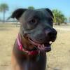 Sand Key Park Paw Playground 020709_00002