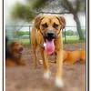 Walter Fuller Complex Dog Park 021409_00042