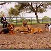 Walter Fuller Complex Dog Park 021409_00041