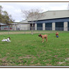 Walter Fuller Complex Dog Park 021409_00020