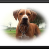 Walter Fuller Complex Dog Park 021409_00037