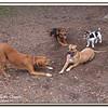 Walter Fuller Complex Dog Park 021409_00051