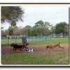 Walter Fuller Complex Dog Park 021409_00023