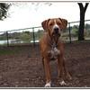 Walter Fuller Complex Dog Park 021409_00035