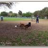 Walter Fuller Complex Dog Park 021409_00026