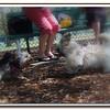 Walter Fuller Dog Park,St  Pete 031109 _00004
