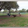 Walter Fuller Complex Dog Park 021409_00021