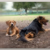 Walter Fuller Complex Dog Park 021409_00034