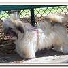 Walter Fuller Dog Park,St  Pete 031109 _00003