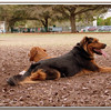 Walter Fuller Complex Dog Park 021409_00033