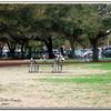 Walter Fuller Complex Dog Park 021409_00003
