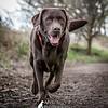 Dog Photographer
