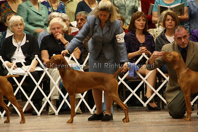 2009 VCA Nationals - Best of Breed