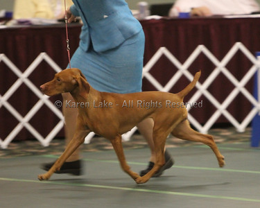 2010 VCA - Best of Breed