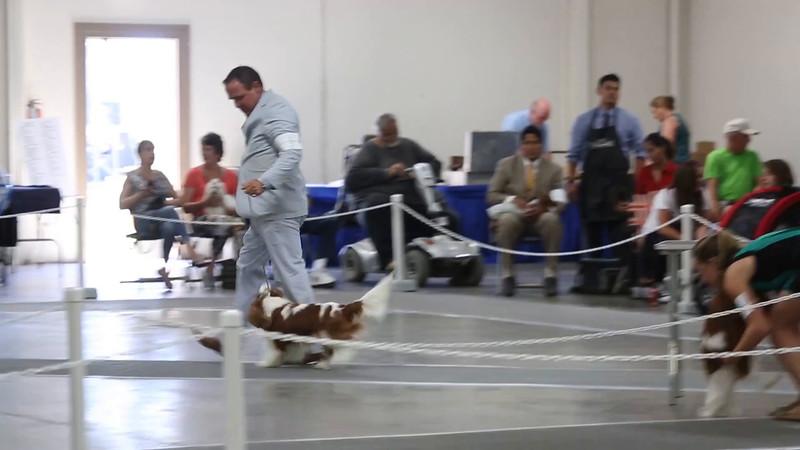 San Luis KC-0232