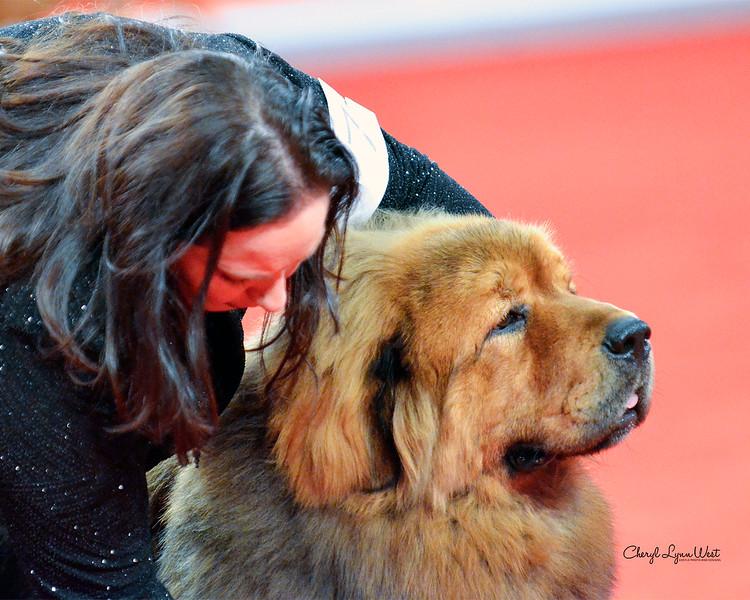 Tibetan Mastiff - GCH CH Nen Sala Ayako