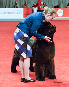 Newfoundland - GCH CH Honey Lanes No Soup For You - Working Group 2