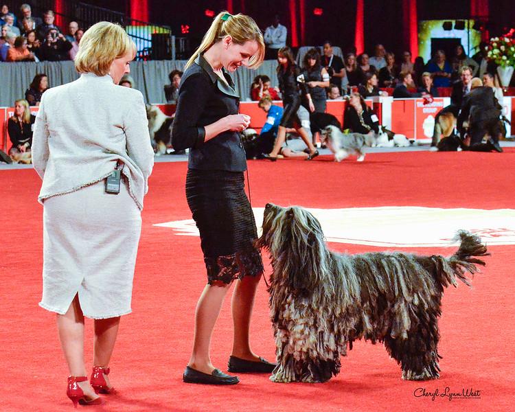 Bergamasco Sheepdog - GCH CH Alp Angels Faggia Dell'Albera