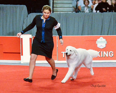 Kuvasz - GCH CH Ederra's Glacier The Power Of Mo'Ne - Working Group 3