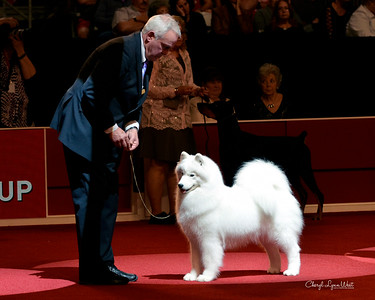 Samoyed - GCHS CH Sammantic Querida - Reserve Best In Show - Working Group 1