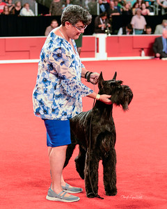 Giant Schnauzer - GCHG CH Doc's Life Is Good CGC