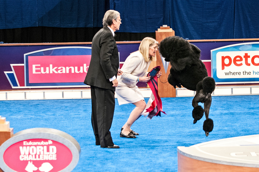 Winner of World Challenge - Standard Poodle from the United States