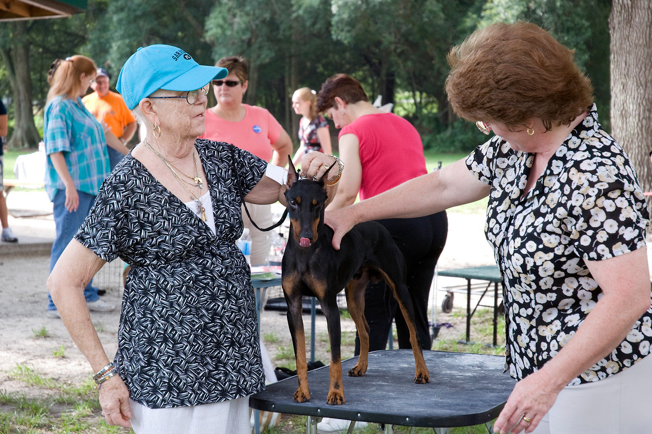 Deeon's Pinot Grecio DXL, a Standard Manchester Terrier, owned by Dee Dillon & Barbara J. Demers, is examined by Judge Teresa Gimbut.