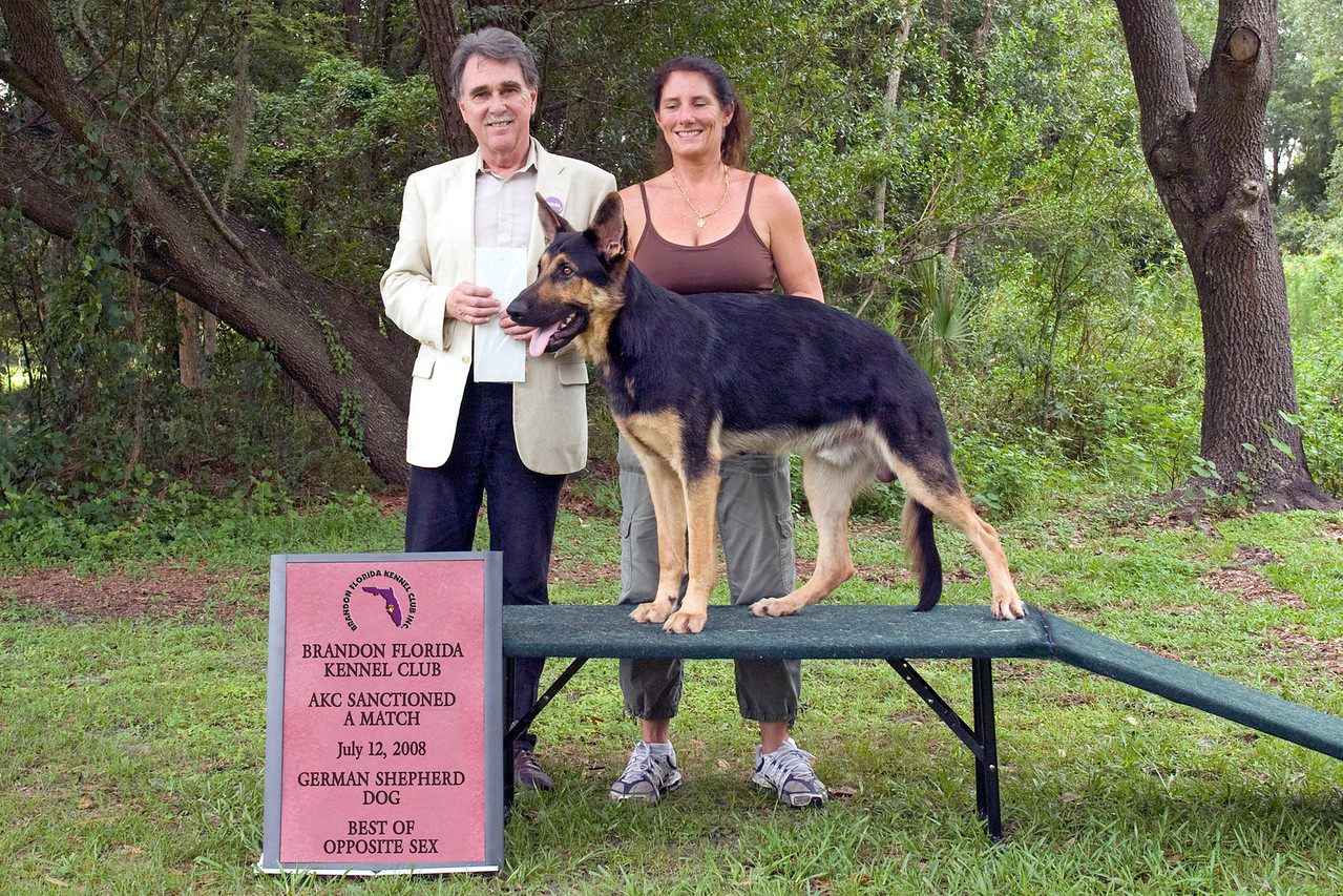 Acki Vom Shelzsmide, a German Shepherd Dog, is shown with his owner/handler Michelle Delaney and Judge Sam Steding.
