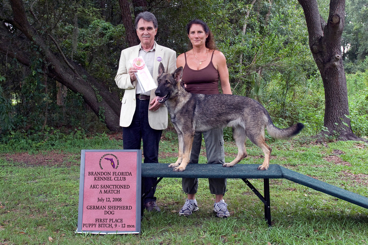 Mocha Von Shelzsmide, a German Shepherd Dog, won first place in the 9 - 12 Puppy Bitch class.  She is shown here with her owner Michelle Delaney and Judge Sam Steding.
