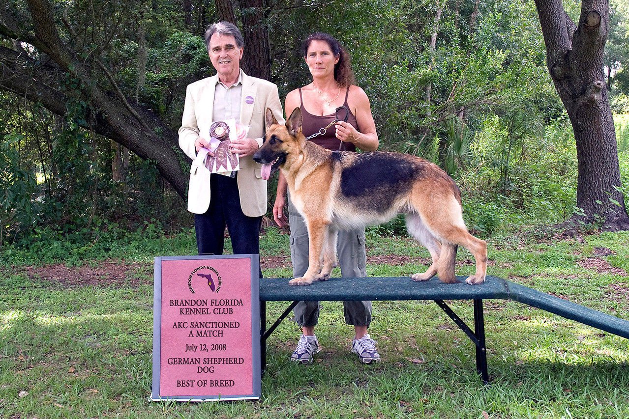 Alya Vom Angelbaum, a German Shepherd Dog, took Best of Breed.  She is owned by Michelle Delaney.