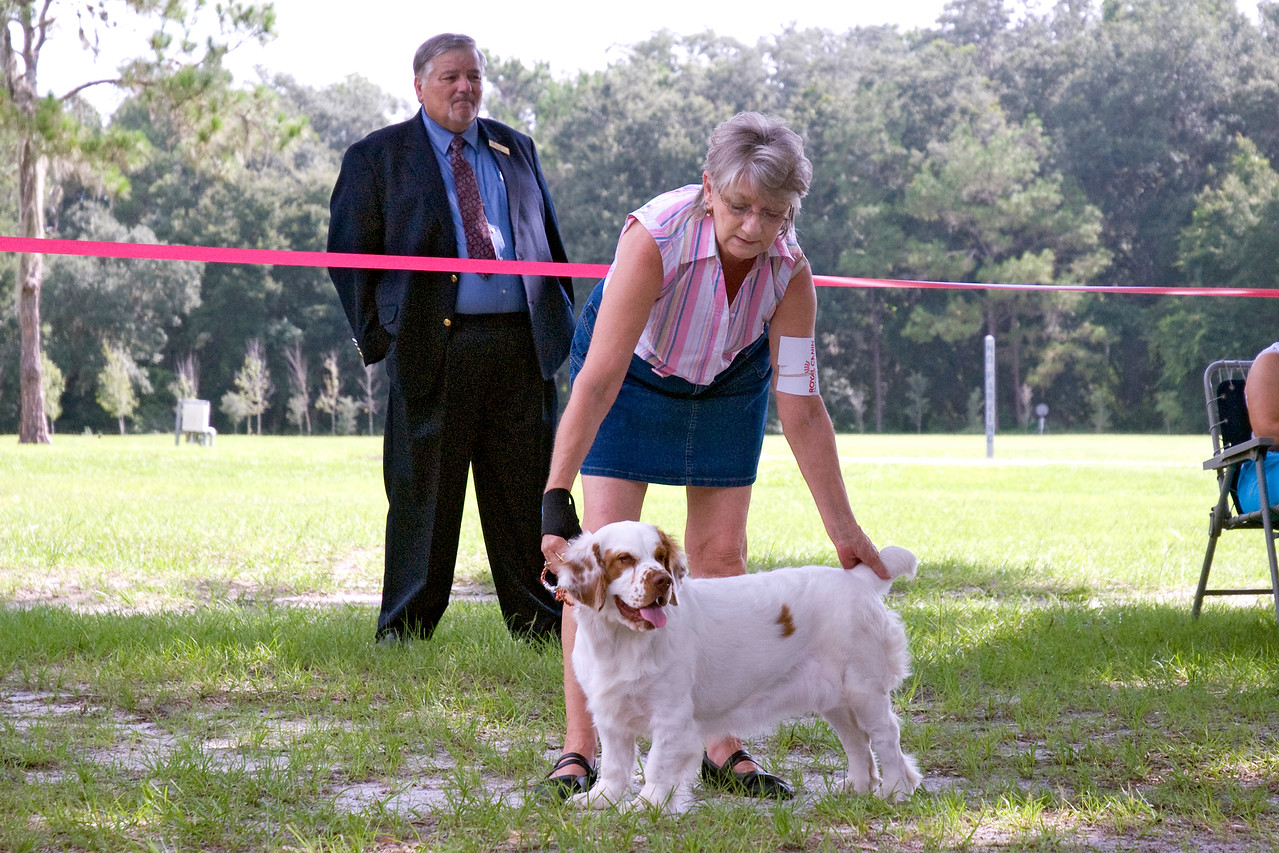 Casmir Ginger Snap, a Clumber Spaniel, holds her stack for the judge's consideration.