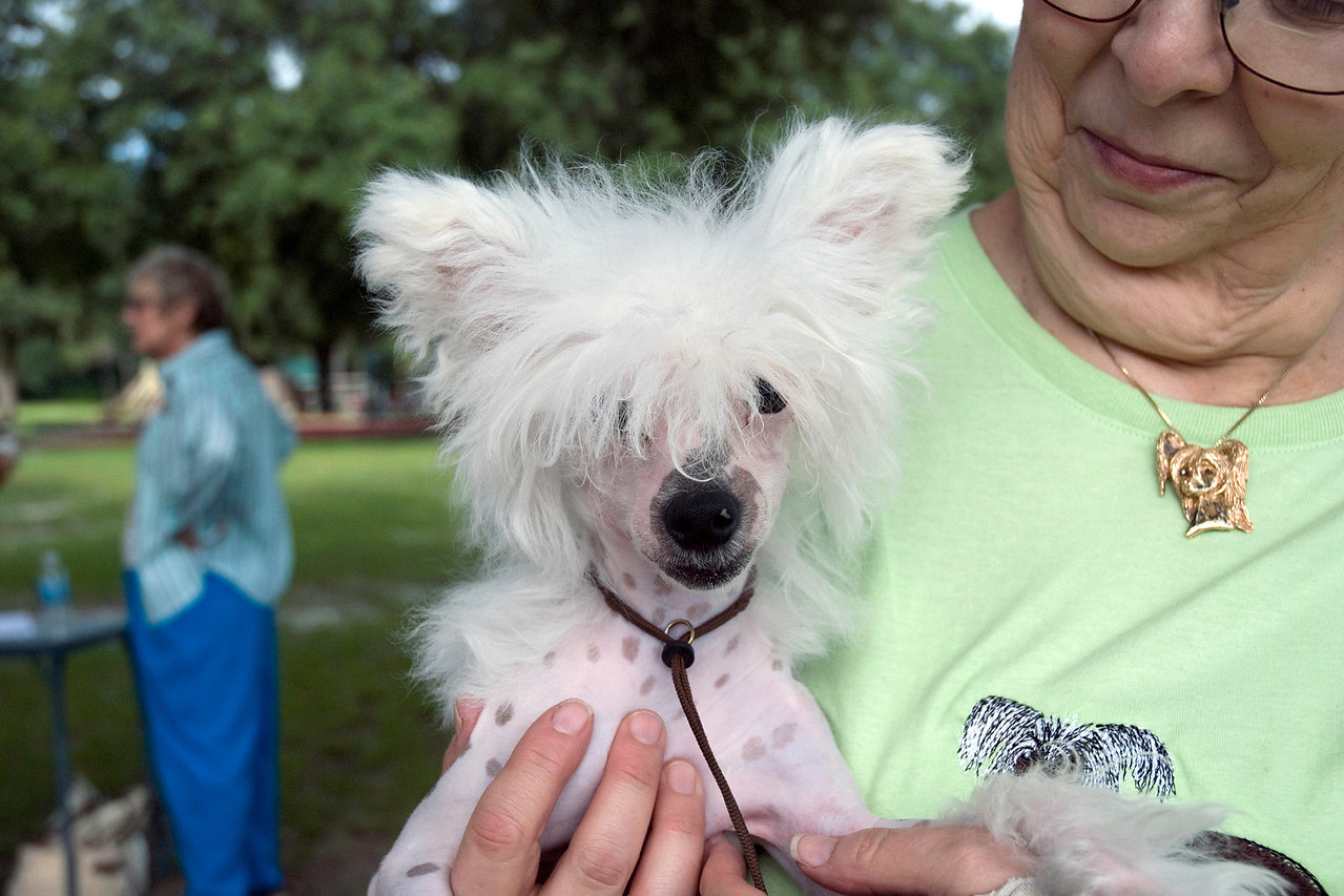 Toby, a hairless Chinese Crested puppy