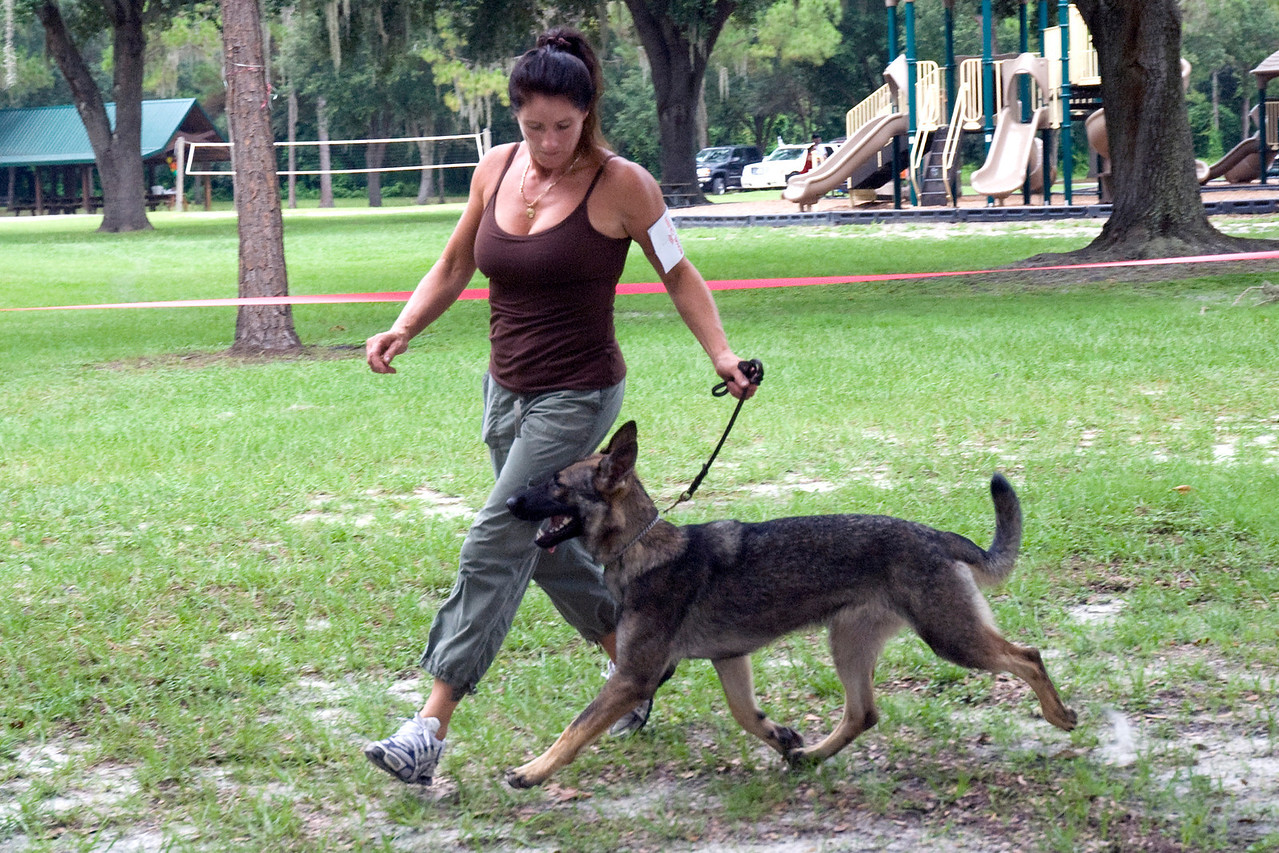 Mocha Von Shelzsmide, a German Shepherd Dog, shows good extension.  She is owned by Michelle Delaney.