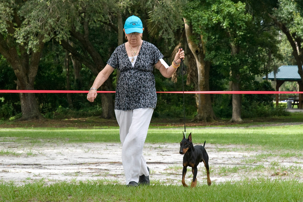 Deeon's Pinot Grecio DXL, a Standard Manchester Terrier, is owned by Dee Dillon & Barbara J. Demers.