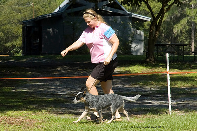 Call Me A Sissy AnyDayBut Wednesday, an Australian Cattle Dog, competed in the 6 - 9 month Puppy Bitch class.  She is owned by Tricia Lynn Glotfelty & William B. Grosser.