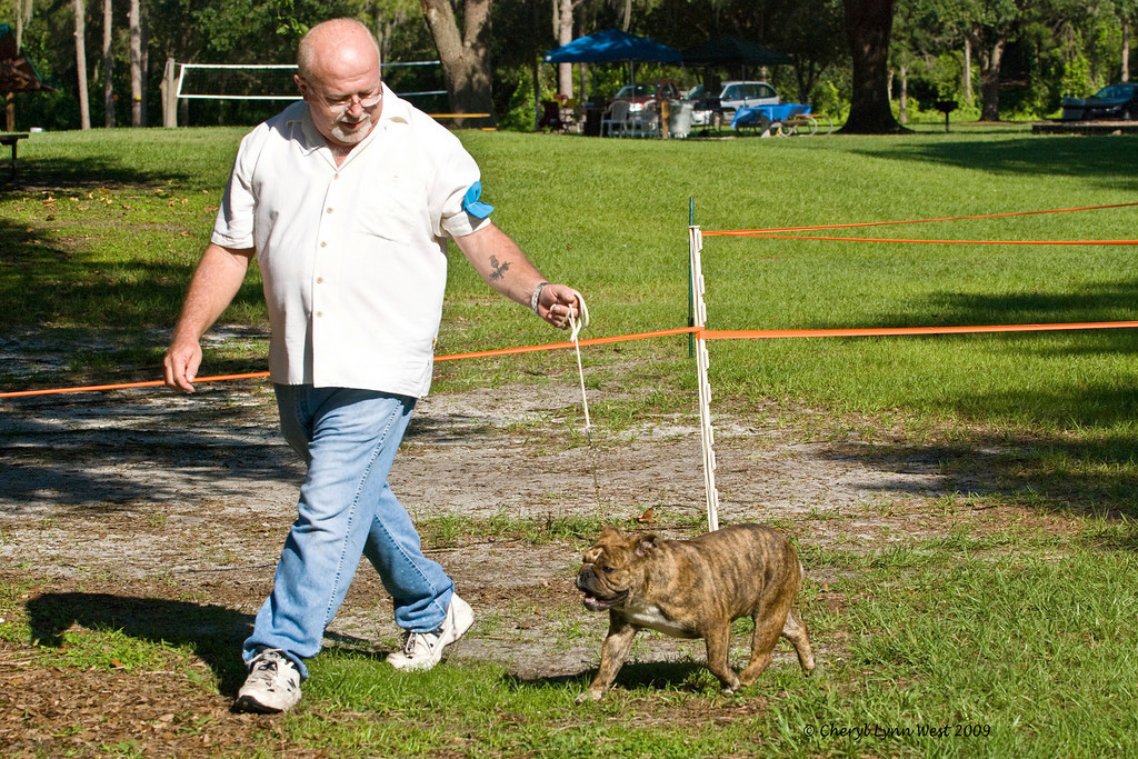 Heavensent Nonchalent Debutante, a 12 - 18 month Bulldog bitch, is owned by Ken Stowell, Alison Feckelman & Ellen Karnes.