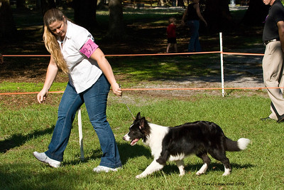 Call Me Good As Gold, a 6 - 9 Puppy Bitch, is shown by owner Salena Wilson, taking Best of Breed and Group 2.