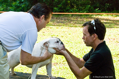Emerald First Lady, a 6 - 9month puppy bitch, is owned by Kevin & Michelle Swim.