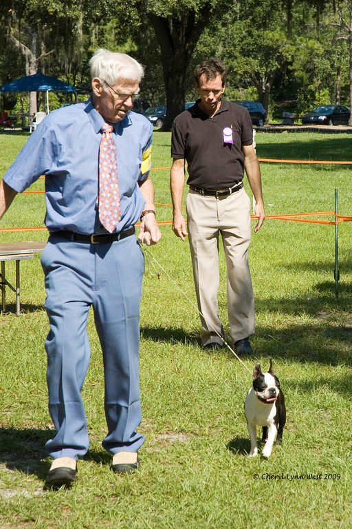 Renea's Best Buddy, a Boston Terrier, took Best in Match.  He is owned, handled and bred by Byron W. Elder.