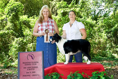 Call Me Good As Gold, a 6 - 9 Border Collie Puppy Bitch, is shown by owner Salena Wilson, taking Best of Breed and Group 2.
