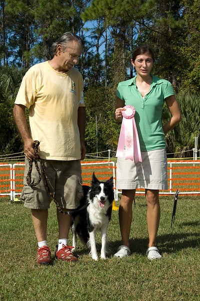Border Collie - first place in Rally Advanced.
