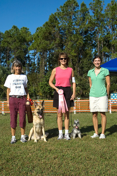 Rally Excellent qualifiers - Miniature Schnauzer, first place & German Shepherd Dog, second place