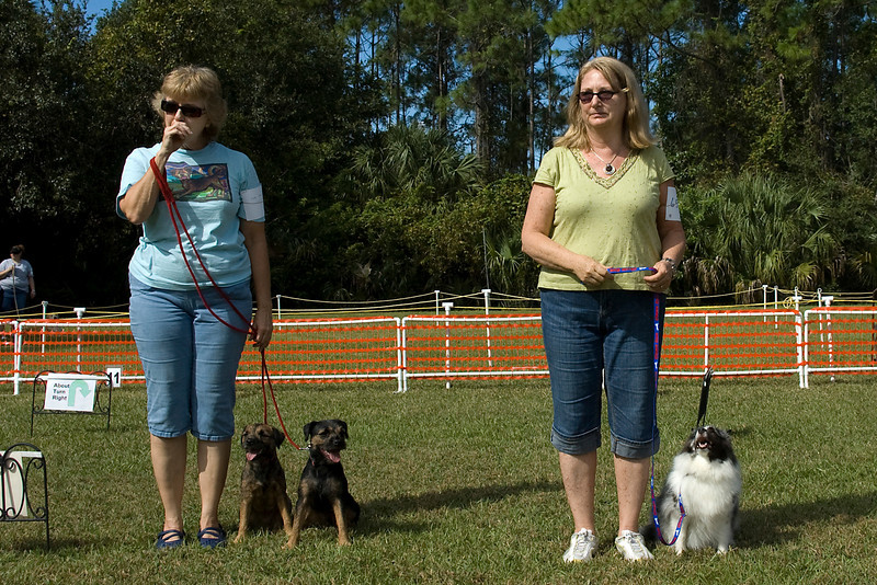 Qualifiers for the Rally Novice course - Shetland Sheepdog, first place & Border Terriers, second & third place
