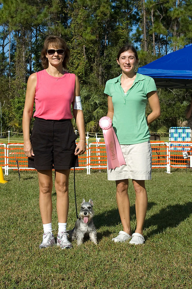 Miniature Schnauzer - 1st place, Rally Excellent
