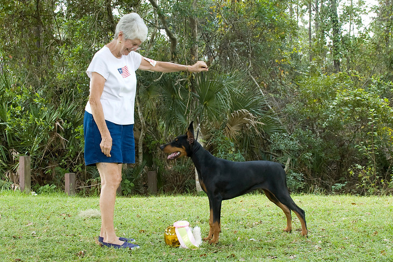 """Paris,"" a Doberman Pincher won the Working Group and went onto win Best In Match Junior Puppy."