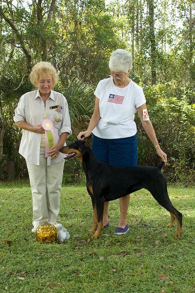 """Tara,"" a Doberman Pincher won the Working Group and went onto win Best In Match Adult."