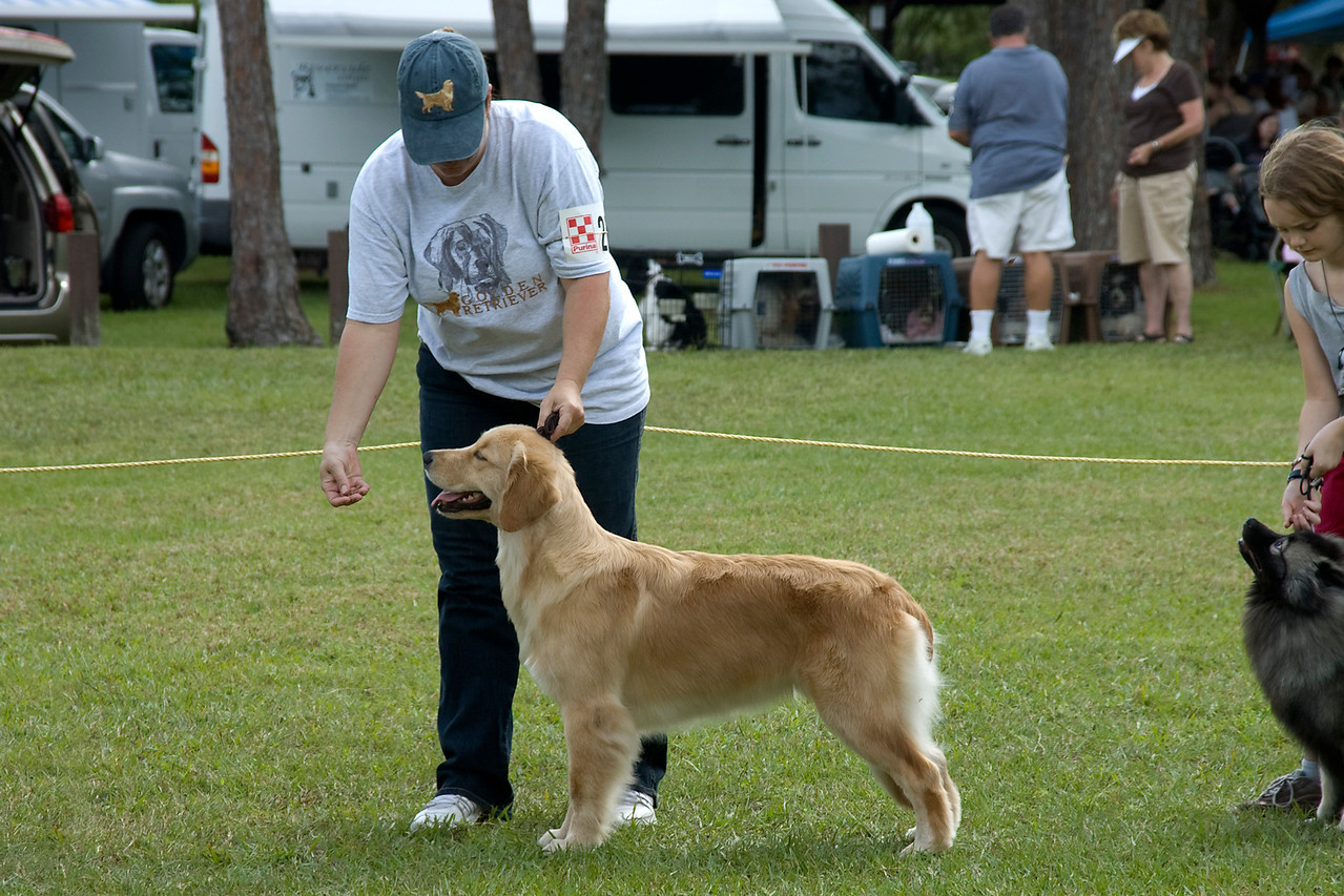 This Golden Retriever stacks beautifully during the Best In Match competition.